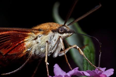 Invertebrates-10