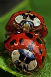 Invertebrates-11