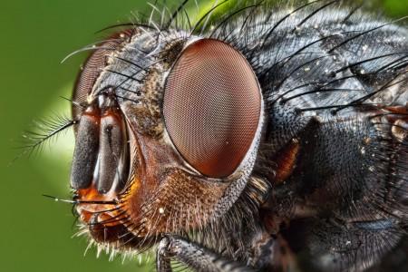 Invertebrates-12