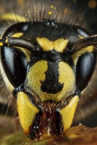 Invertebrates-13