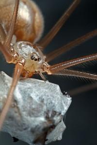Invertebrates-14