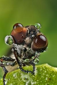 Invertebrates-19
