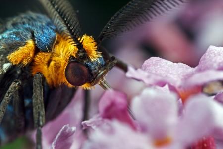 Invertebrates-20