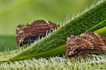 Invertebrates-21