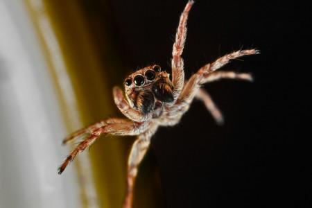 Invertebrates-22