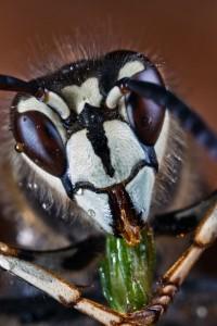 Invertebrates-23