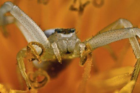 Invertebrates-24