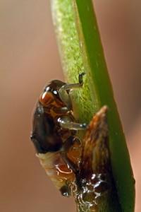 Invertebrates-28