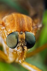 Invertebrates-29