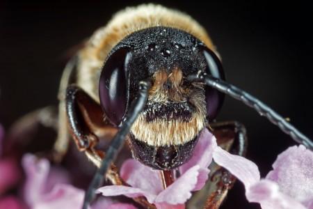 Invertebrates-3