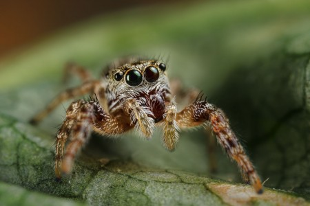 Invertebrates-31