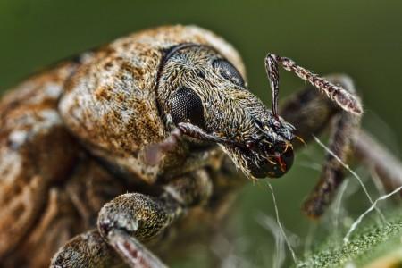 Invertebrates-33