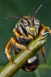 Invertebrates-34