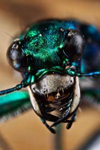 Invertebrates-4