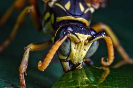 Invertebrates-5