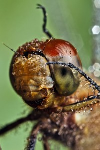 Invertebrates-6