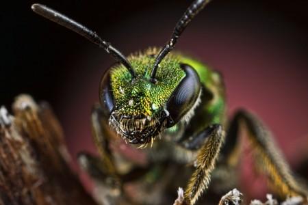 Invertebrates-9